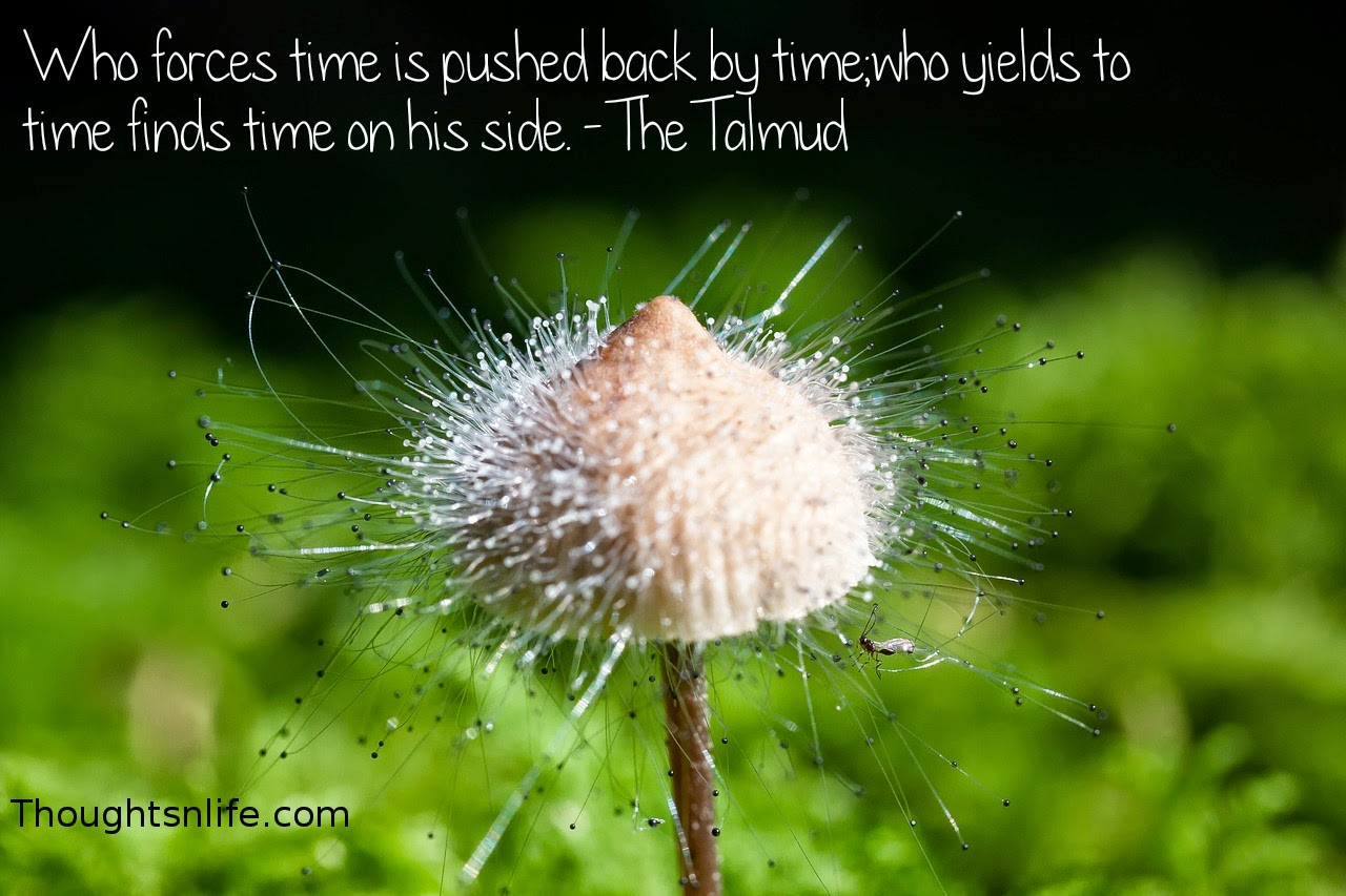 Thoughtsnlife.com : Who forces time is pushed back by time; who yields to time finds time on his side. - The Talmud