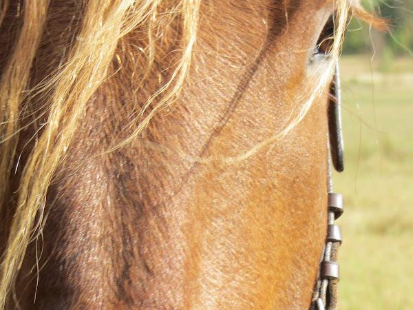 Kaikki kau...karanneet hevoset