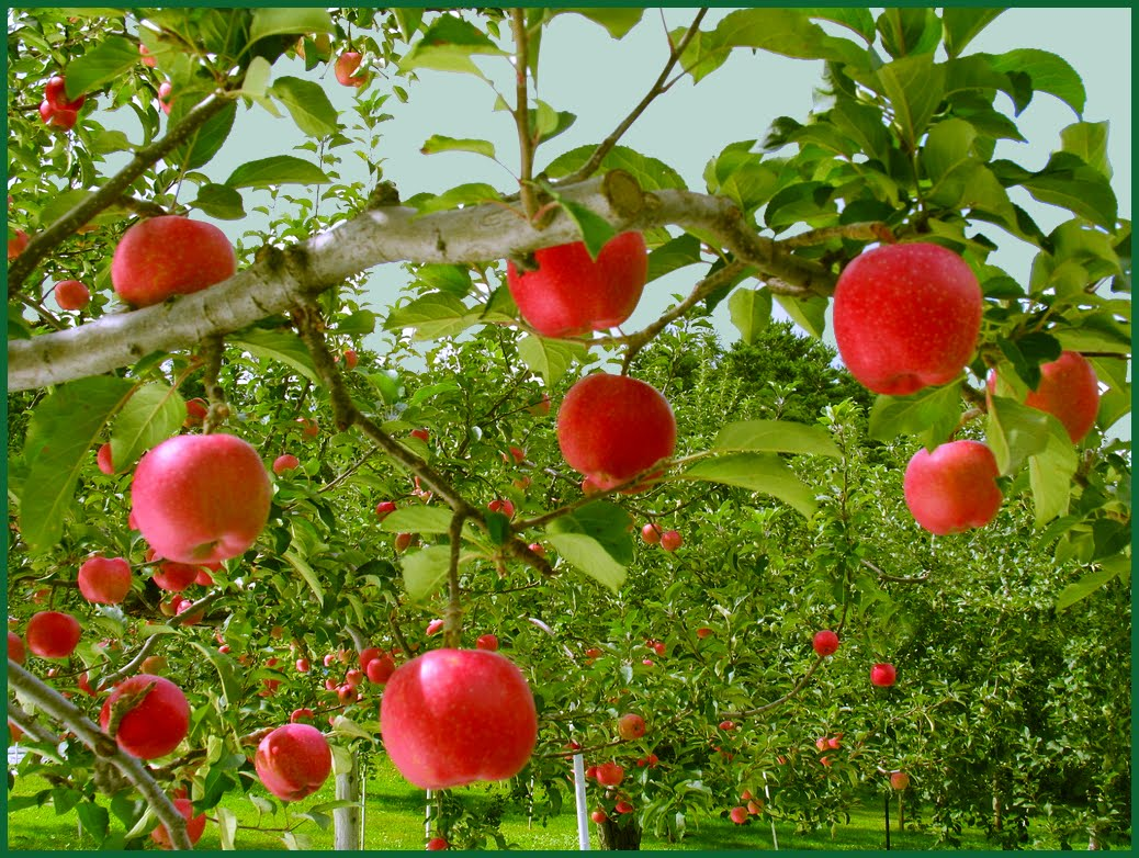 images of apple picking Fall is next month, people, so now is the perfect time to start getting your autumn activities in line we all know fall wouldn't be complete without apple picking, so it's time to start planning.