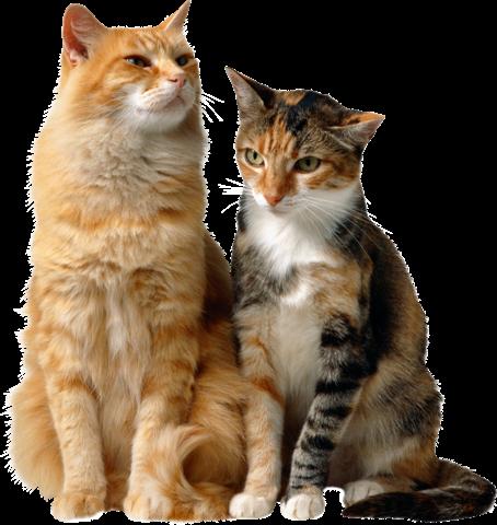 Judy's Cats