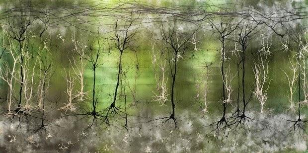 Neurogénesis: ¿Cómo Crecen las Nuevas Neuronas?