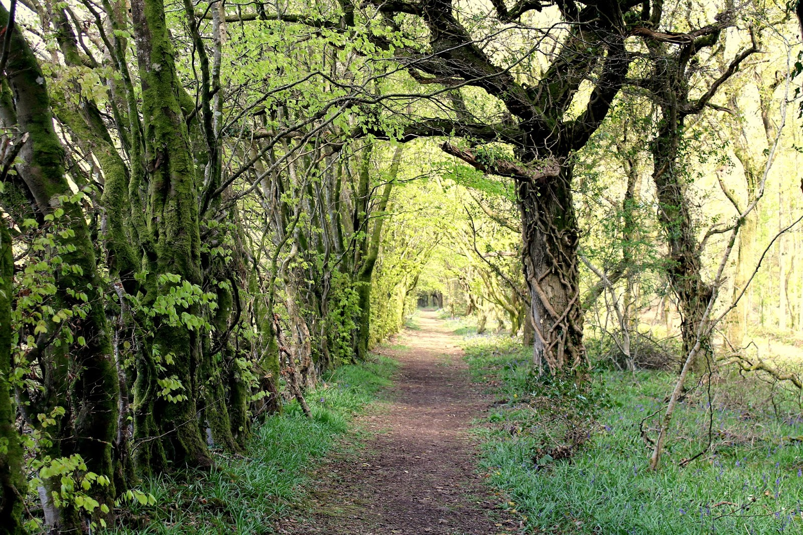 pretty path through woods