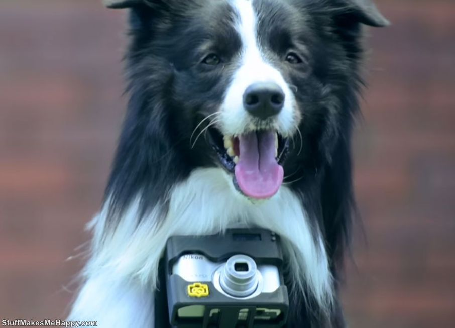 Dog Photographer - The World's First Dog-Photographer Who Takes Pictures During The Burst Of Emotions