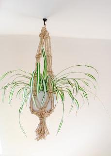 macrame, plant, hanger, basket. craft, spider plant