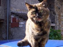 la mia gattina LUNA