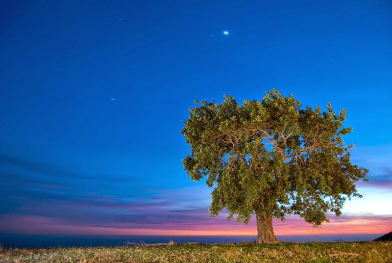 شجرة مصورة ليلا