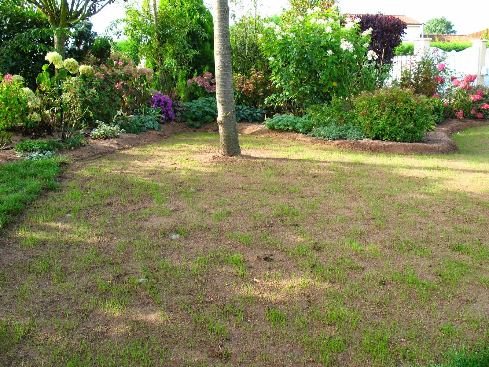 Roses du jardin ch neland l 39 volution d 39 un semis de gazon for Au bout du jardin