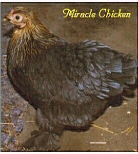 The Miracle Chicken