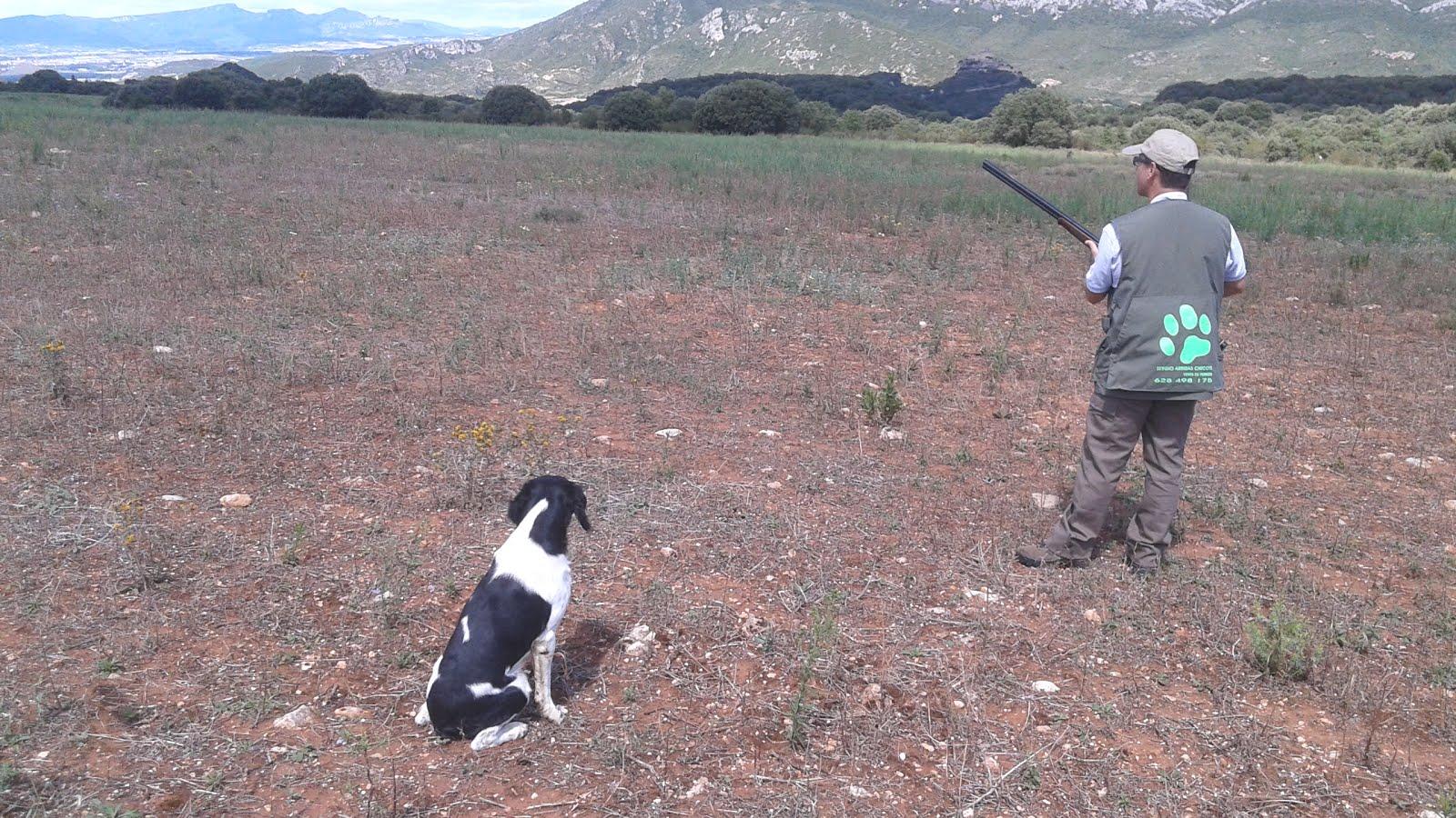 """Entrenamiento con IRON en el Coto """"EL CASTILLO"""" TXOTIARTE. de Santa Cruz del Fierro (Alava)"""