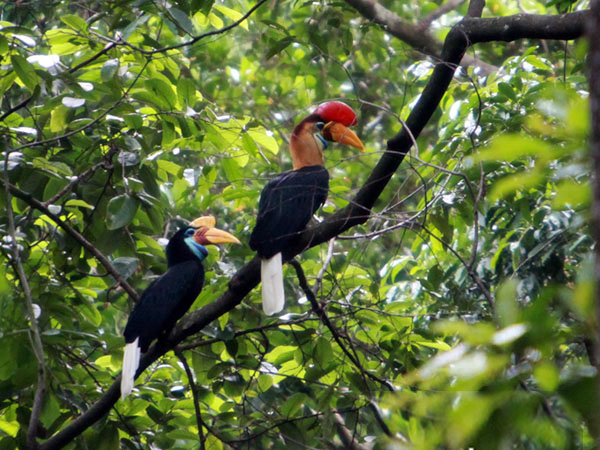 Gallery Photo : Burung Indonesia Yang Dilindungi