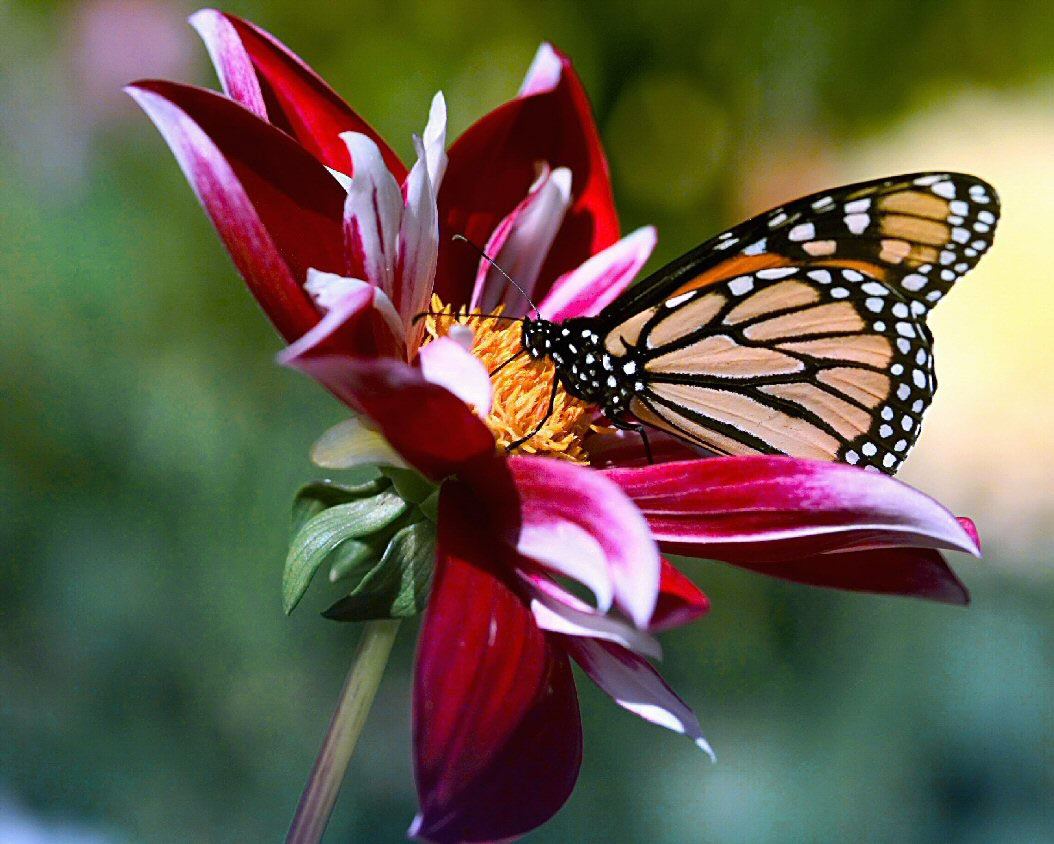 http://3.bp.blogspot.com/-bPjPEg_9xRQ/TnuYKWGryBI/AAAAAAAAEN8/2RjF-XibG5k/s1600/Flowers-and-Butterfly-Wallpaper.jpg