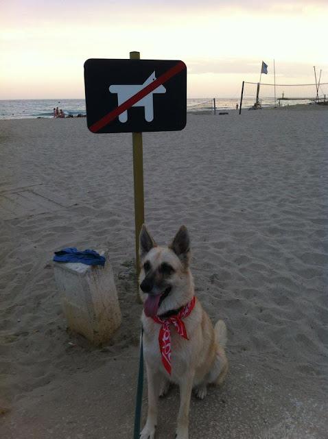 playas perros viajar mascotas