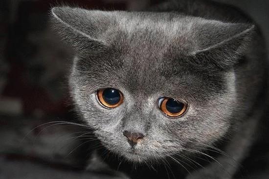 fotofesto: Animals Expressions : Sad Face