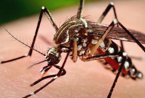 10 самых опасных насекомых