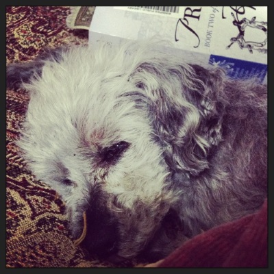 Murchie lays curled on his red tapestry comforter. His head fills most of the frame, though a trade paperback copy of Prince's Gambit is visible behind him. Its pale purple cover features a line drawing of a sword rack with two sheathed swords in it.
