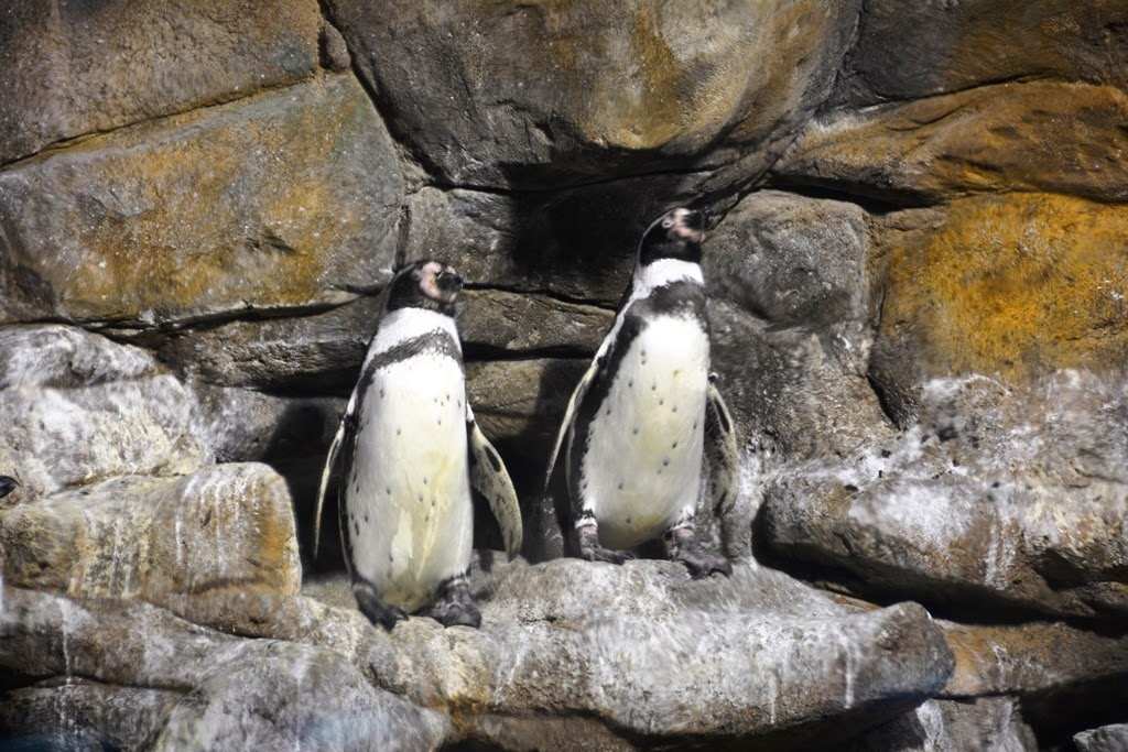 Barcelona Aquarium penguin