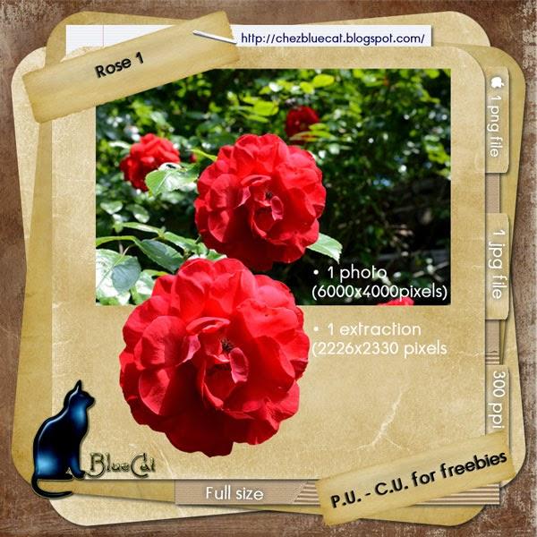 http://3.bp.blogspot.com/-bQypM25St_g/U-NFdpa5DuI/AAAAAAAAFYU/rXlPPP7wDQA/s1600/BlueCat_Rose01.jpg