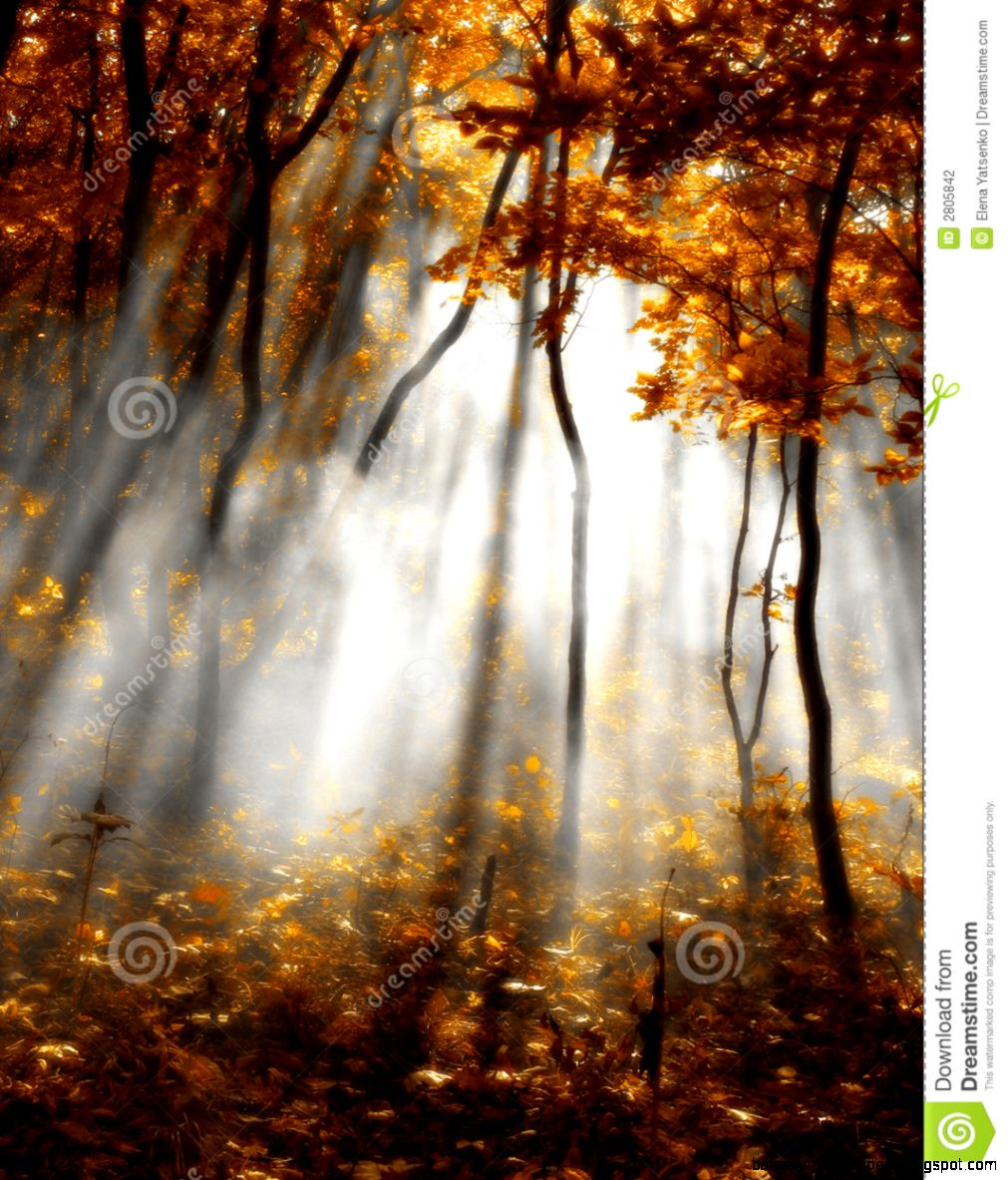Autumn Red Forest Stock Photography   Image 2805842