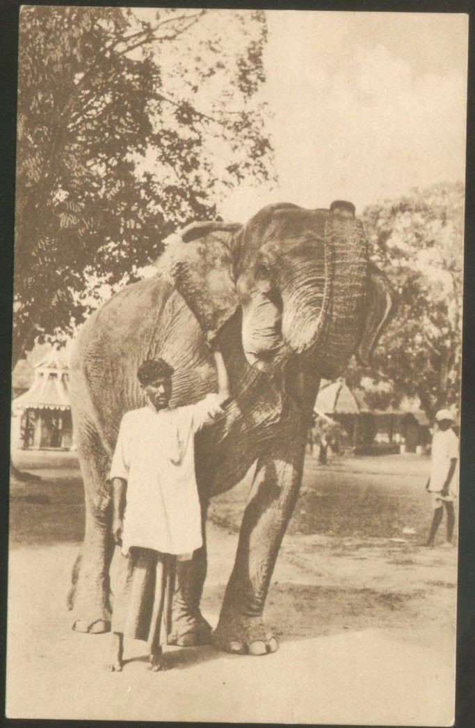 Elephant with Trainer (Mahout)