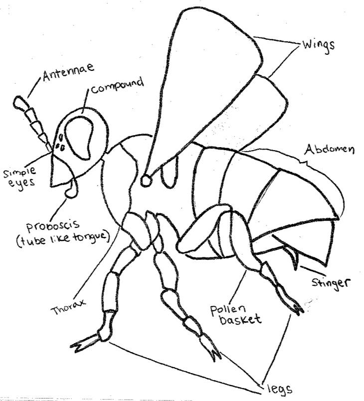 Worker Bee Diagram Wiring Source