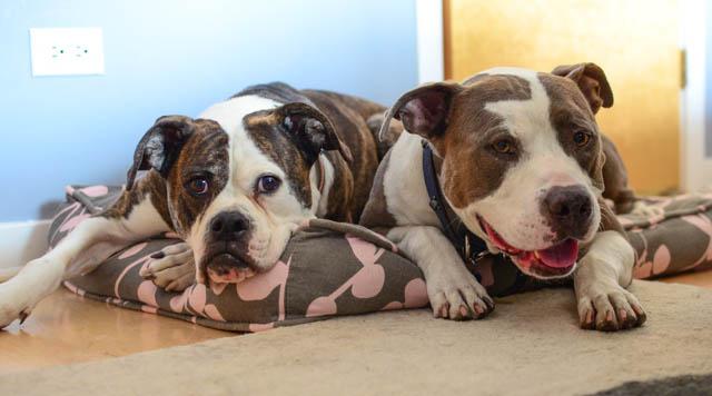 Dog Beds Rens