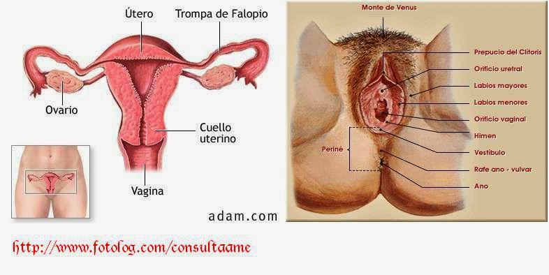 Sistemas Reproductivos: Sistemas Reproductores