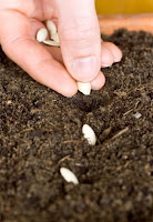 vegetable seed planting by hand