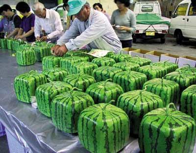 semangka-unik