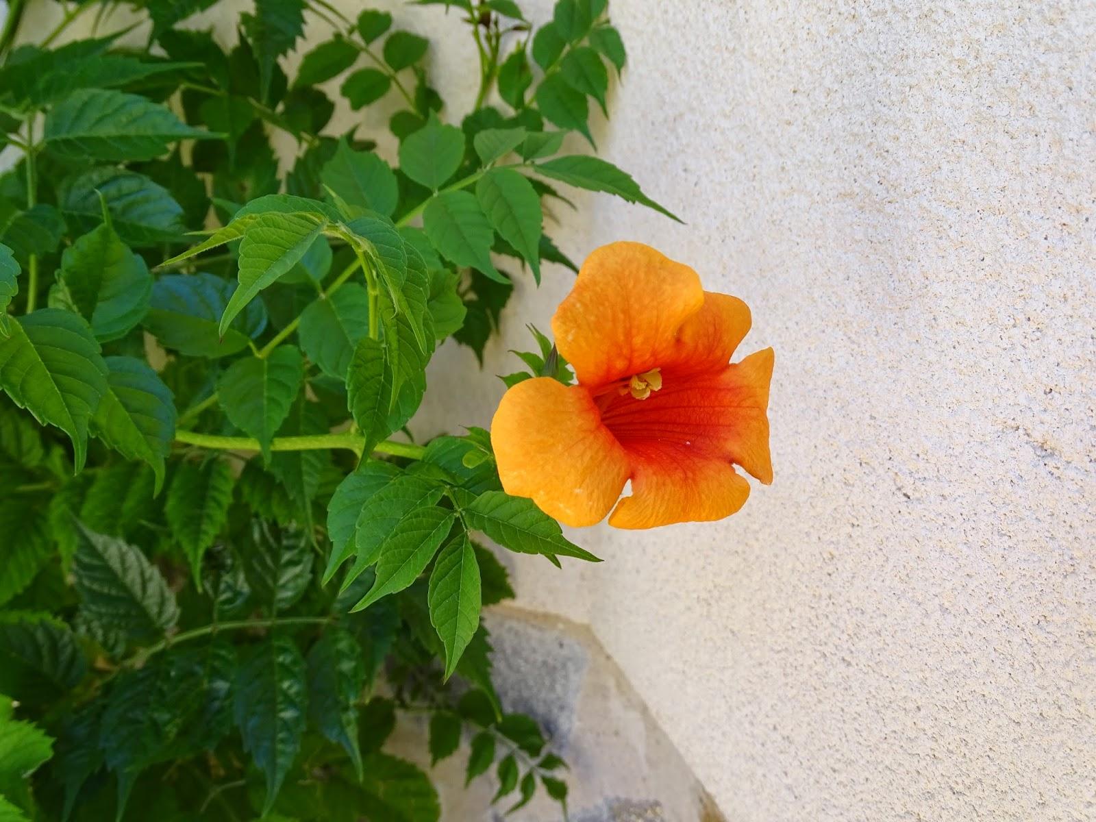 Turquesasyperlas flores de verano - Flores de verano ...