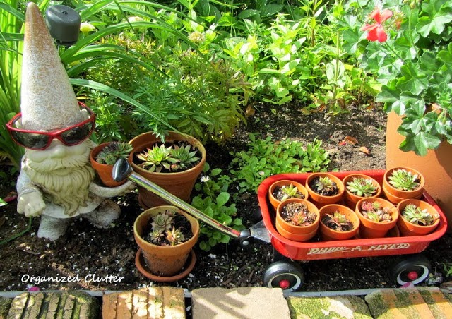 Planting in Terra Cotta Pots www.organizedclutterqueen.blogspot.com