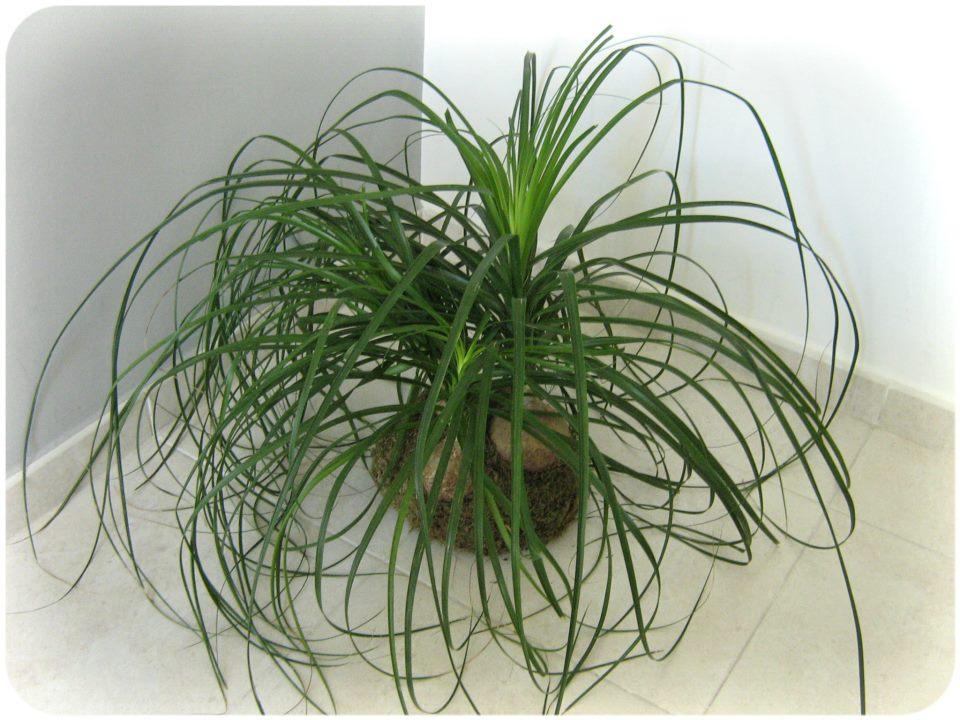 Kokedamas valencia mas encargos de plantas sin maceta for Plantas en macetas