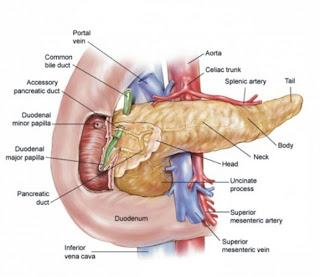 enfermedades del pancreas