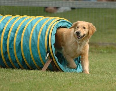 Rèn luyện thói quen tốt cho vật nuôi