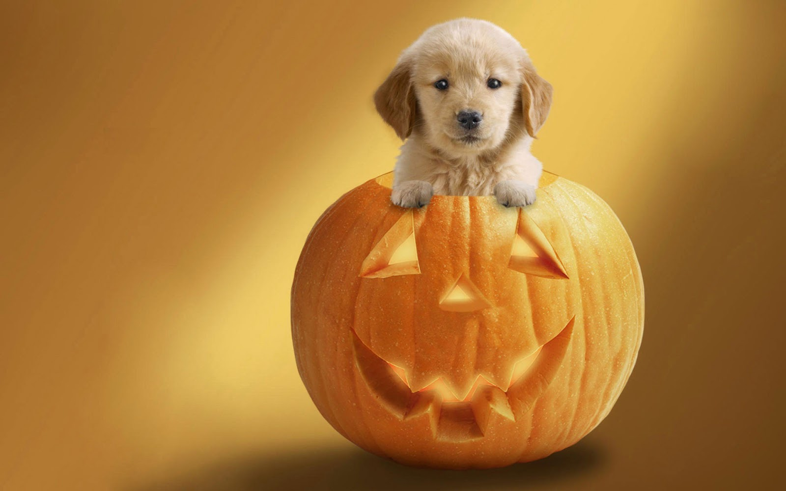 Image result for cute guy with pumpkin