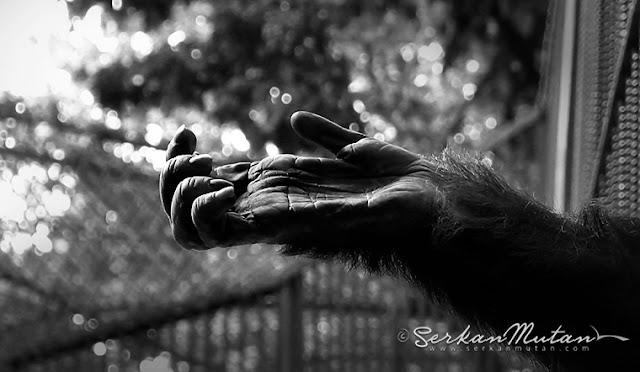 hayvanat bahçelerindeki hayvanların durumu