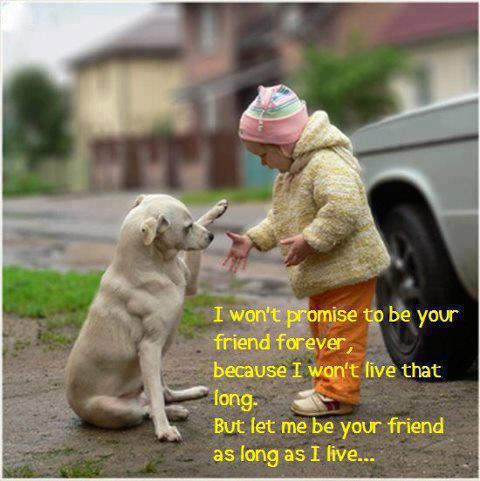 life inspiration quotes a dog is a friend inspiration