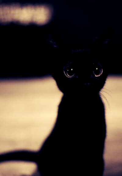 back cat,  gato negro