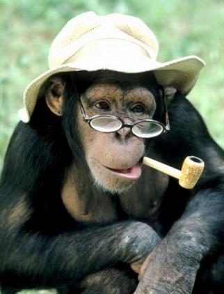 Monos con un look muy gracioso