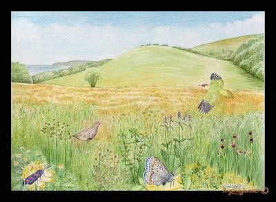 Interpretive Panel illustration Hawthorn Dene County Durham North East UK by Ingrid Sylvestre North East Artist & Illustrator