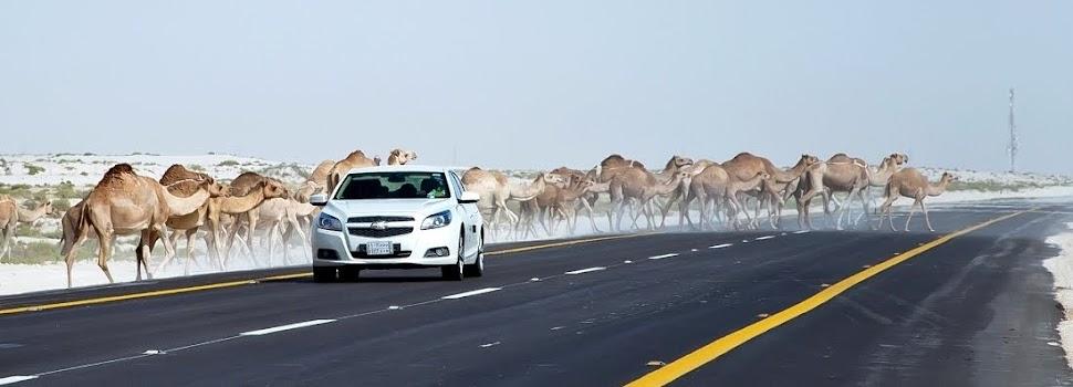 W pustyni bez puszczy czyli Arabia Saudyjska i Oman oczami Polaka