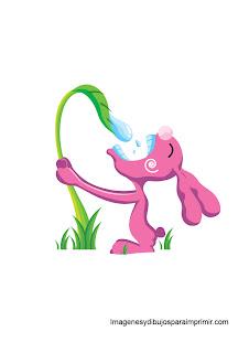 conejo bebiendo agua