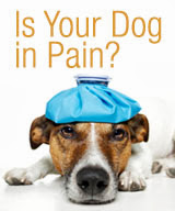 Owner Poll: What Would You Have To See To Believe That Your Dog Was In Pain?