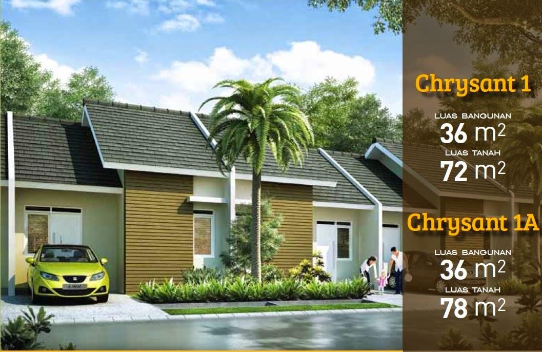 chrysant-36-72-citra-indah