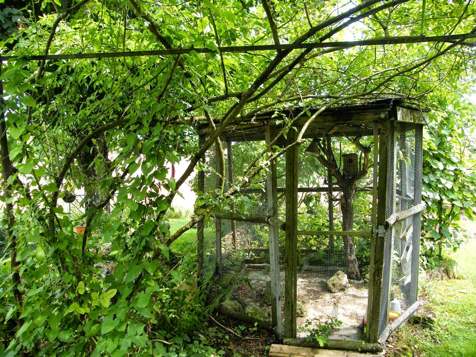 Au gr du jardin la vol 39 hier aux oiseaux envol s for Petite plante exterieur