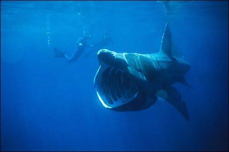Land Shark Snl Snl 39 s Quot Land Shark Quot Comedy