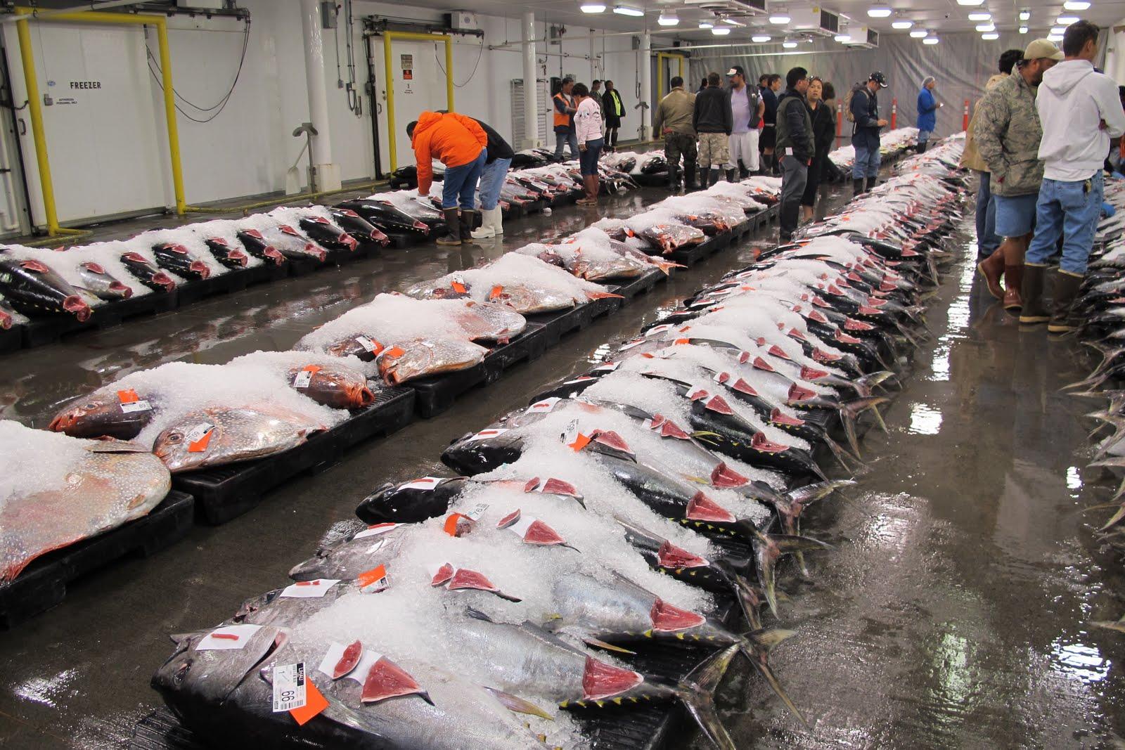 Honolulu fish auction munchie musings for Fishing supplies honolulu