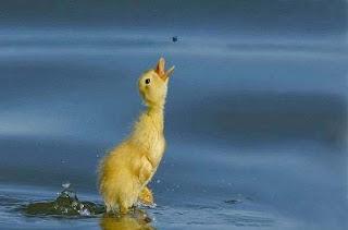 صور لحيوانات في لحظات نادرة لن تتكرر 5+%25282%2529.jpg