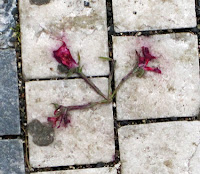 crushed flower concrete Ola Blessed