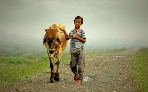 Yo y mi vaca