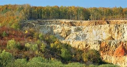 Restauración forestal